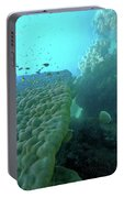 Butterfly Fish  Portable Battery Charger