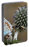 butterfly on a Echinops adenocaulon Portable Battery Charger
