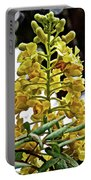 Caesalpinia Cacalaco In Huntington Desert  Gardens In San Marino-california  Portable Battery Charger