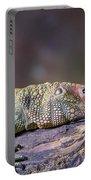 Caiman Lizard Portable Battery Charger