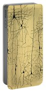 Cajal Drawing Of Microscopic Structure Of The Brain 1904 Portable Battery Charger