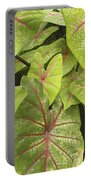Caladium Leaves Portable Battery Charger