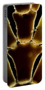 Calcareous Seaweed, Lm Portable Battery Charger