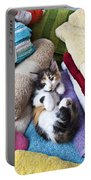 Calico Kitten On Towels Portable Battery Charger by Garry Gay
