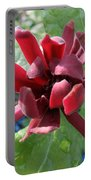 Calycanthus  Portable Battery Charger