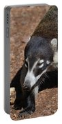 Candid Of A Coati Portable Battery Charger