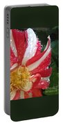 Candy Cane Dahlia Portable Battery Charger