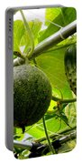 Cantaloupe And Hanging On Tree 1 Portable Battery Charger