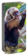Capuchin Monkey Chewing On A Stick Portable Battery Charger