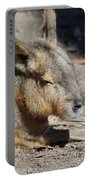 Capybara Resting In The Warm Sunlight Portable Battery Charger