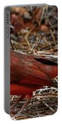 Cardinal On Pine Straw Portable Battery Charger