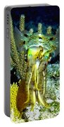 Caribbean Squid At Night - Alien Of The Deep Portable Battery Charger