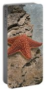 Caribbean Starfish Portable Battery Charger