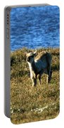 Caribou Fawn Portable Battery Charger