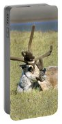 Caribou Rest Portable Battery Charger