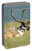 Caribou Resting Portable Battery Charger