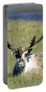 Caribou Resting In Tundra Grass Portable Battery Charger