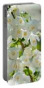 Carolina Silverbells In Spring Portable Battery Charger