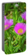 Carpobrotus Edulis Pink Ice Plant Portable Battery Charger