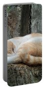 Cat On The Tree Portable Battery Charger