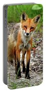Cautious But Curious Red Fox Portrait Portable Battery Charger
