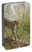 Cheetah Exploration Portable Battery Charger