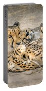 Cheetah Lounge Cats Portable Battery Charger