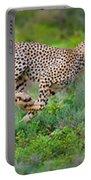 Cheetahs Acinonyx Jubatus Hunting Portable Battery Charger