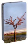 Cherry Tree Standing Alone In A Park, Lit By The Light  Portable Battery Charger