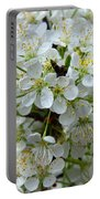 Chickasaw Plum Blooms Portable Battery Charger