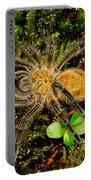 Chilean Tarantula Portable Battery Charger