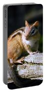 Chipmunk Portrait Portable Battery Charger