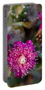 Cholla 3 Portable Battery Charger