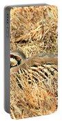 Chuckar Bird Hiding In Grass Portable Battery Charger