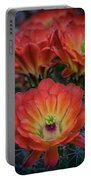 Claret Cup Cactus Flowers  Portable Battery Charger