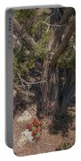 Claret Cup Cactus #2 Portable Battery Charger