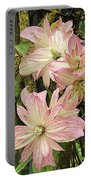 Clematis Montana Marjorie 1060  Portable Battery Charger