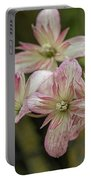 Clematis Montana Marjorie 1963 Portable Battery Charger