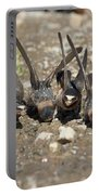 Cliff Swallows Gather Mud Portable Battery Charger