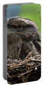 Close Up Look At A Tawny Frogmouth Sitting In A Nest Portable Battery Charger