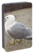 Close-up Of Seagull Portable Battery Charger