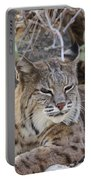 Closeup Of Bobcat Portable Battery Charger