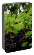 Clover In Montgomery Woods State Natural Reserve Portable Battery Charger
