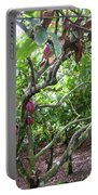 Cocoa Tree With Ripe Cocoa Pods Portable Battery Charger