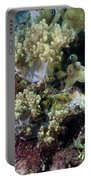 Colorful Coral Reef Portable Battery Charger
