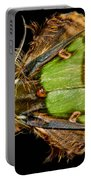 Colorful Cryptic Moth Portable Battery Charger