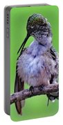 Combing His Feathers - Ruby-throated Hummingbird Portable Battery Charger