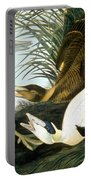 Common Eider, Eider Duck Portable Battery Charger