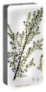 Common Juniper Alchemy Plant Portable Battery Charger