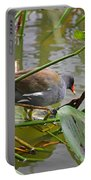 Common Moorhen Portable Battery Charger